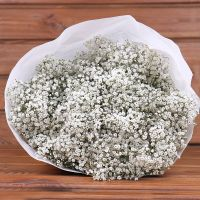 Товар ОПТОМ Gypsophila Million Stars